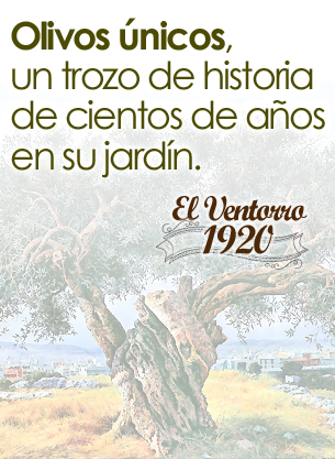 venta de Olivos Centenarios en Madrid